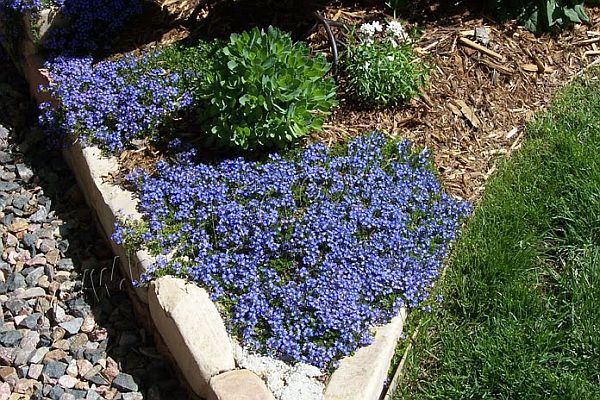 Take Advantage Of Winter Blooms For Your Nj Landscaping