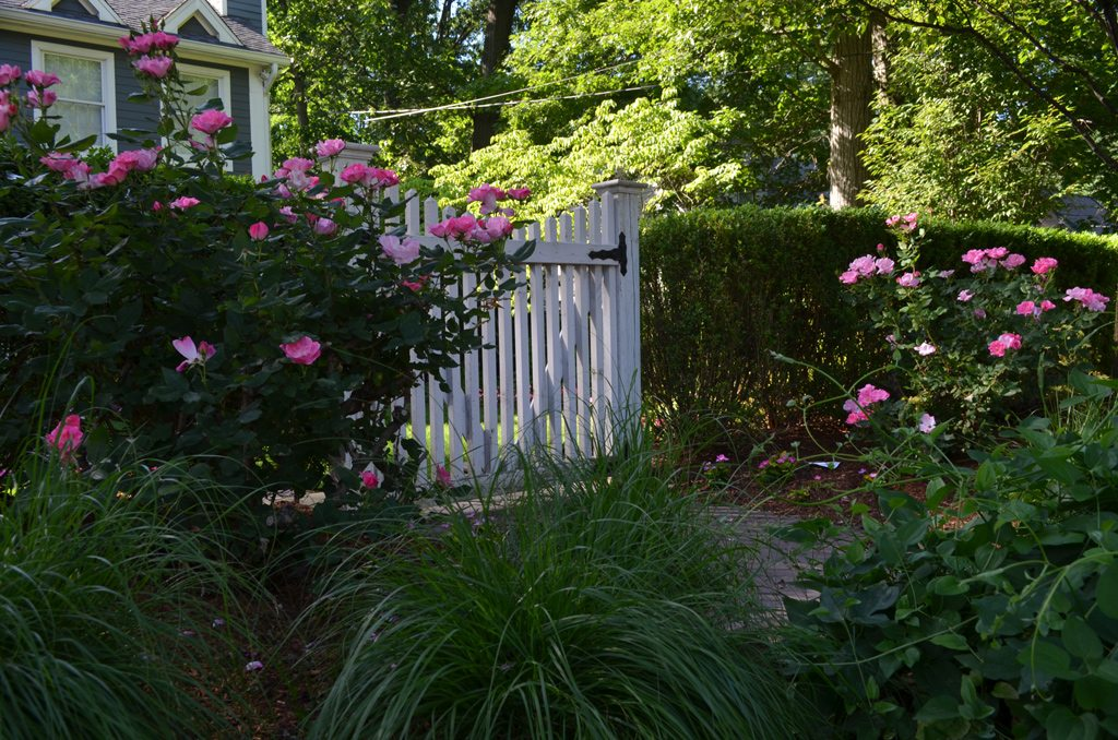 Garden Gate And Roses