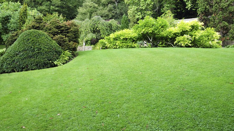 Manicured Lawn and Gardens after Turf Care